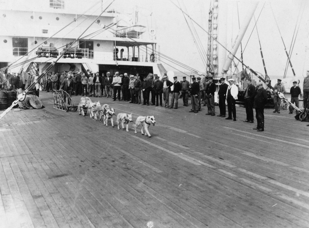 Bilde av Byrd-ekspedisjonens hunder