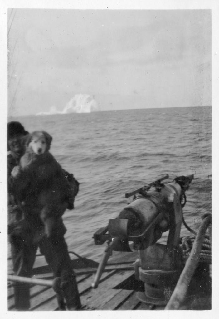 Bilde av Skytter med skipshund