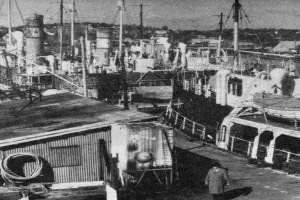 Bilde av Kamfjordverven