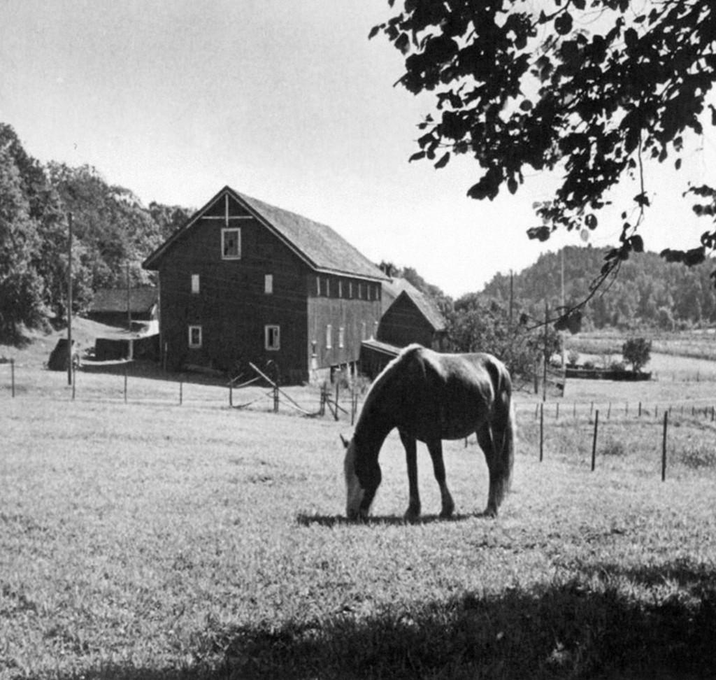 Bilde av På beite under krigen