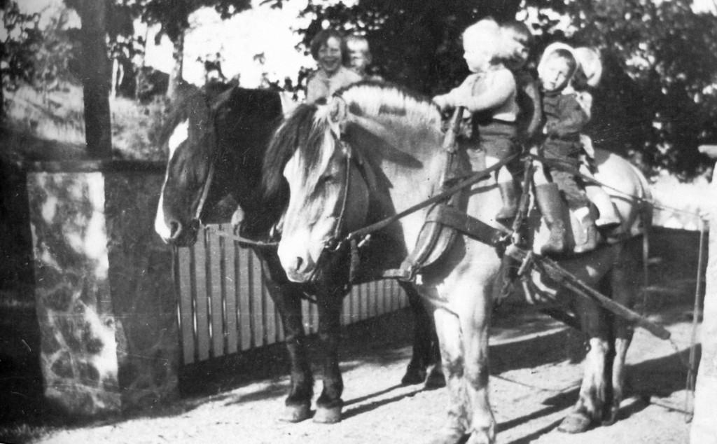 Bilde av Tålmodige hester
