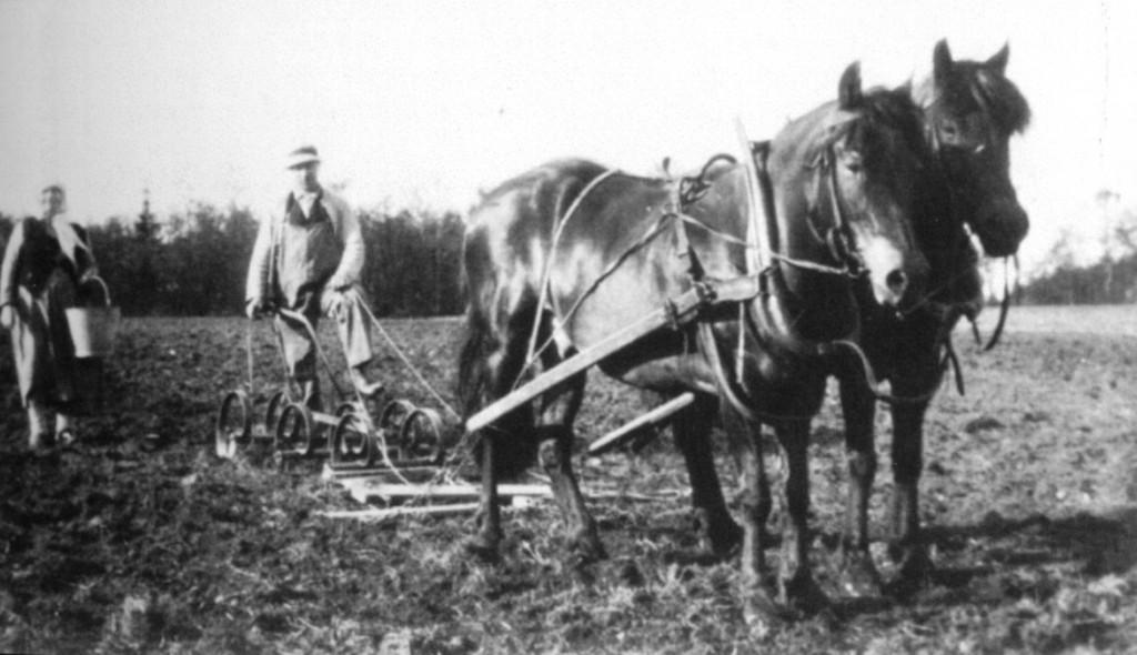 Bilde av Harving og potetsetting