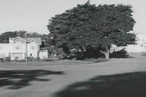 Bilde av Skiringssalsveien diverse