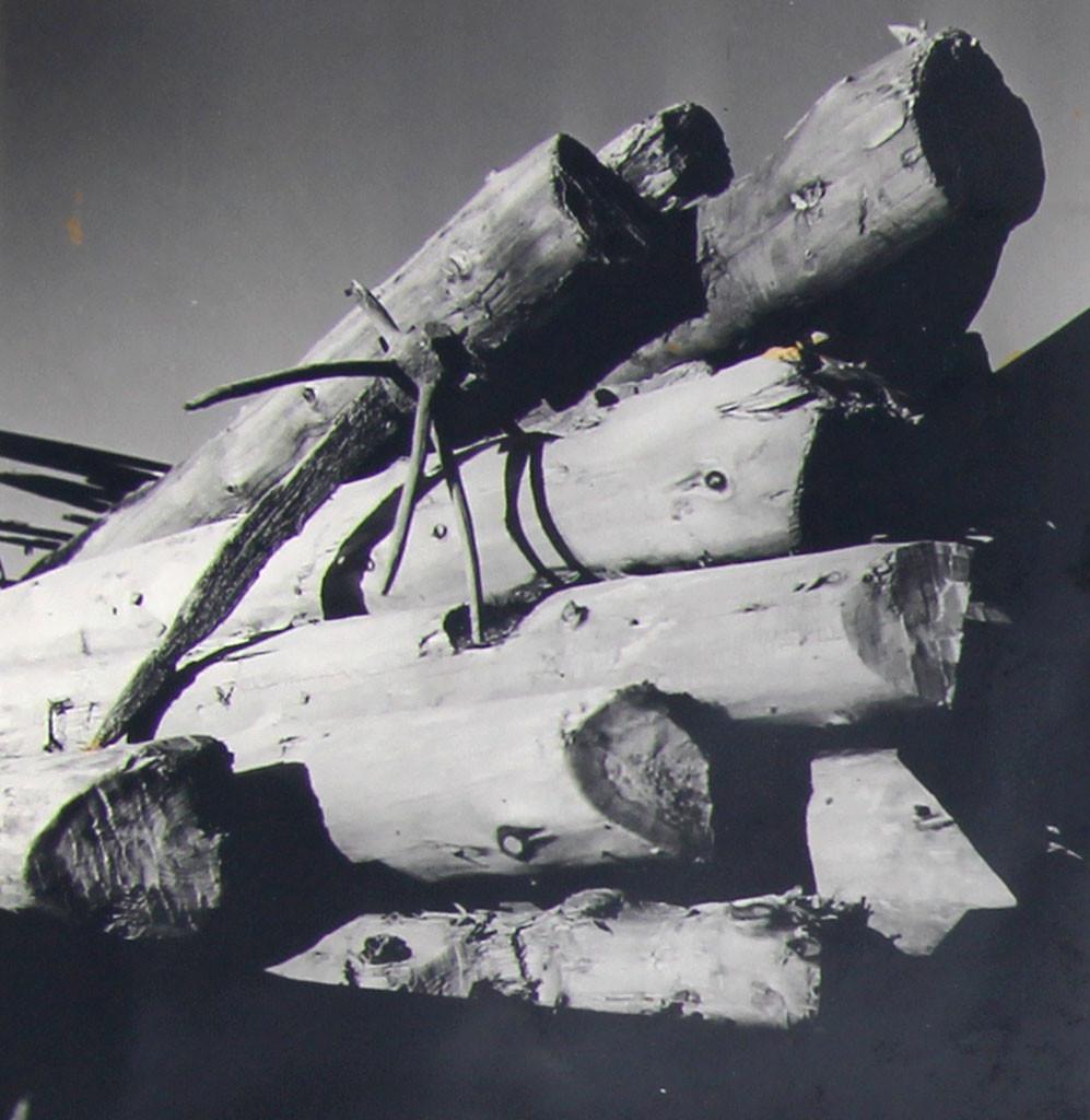Bilde av Stort tømmer funnet