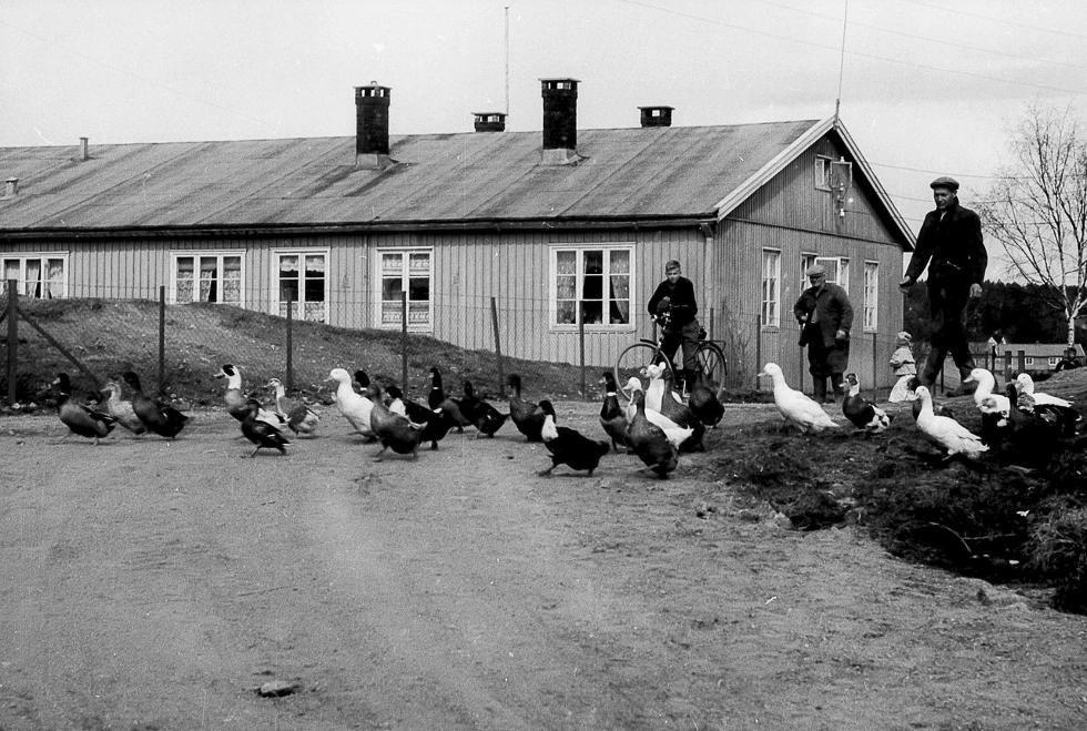 Bilde av Tyskerbrakkene