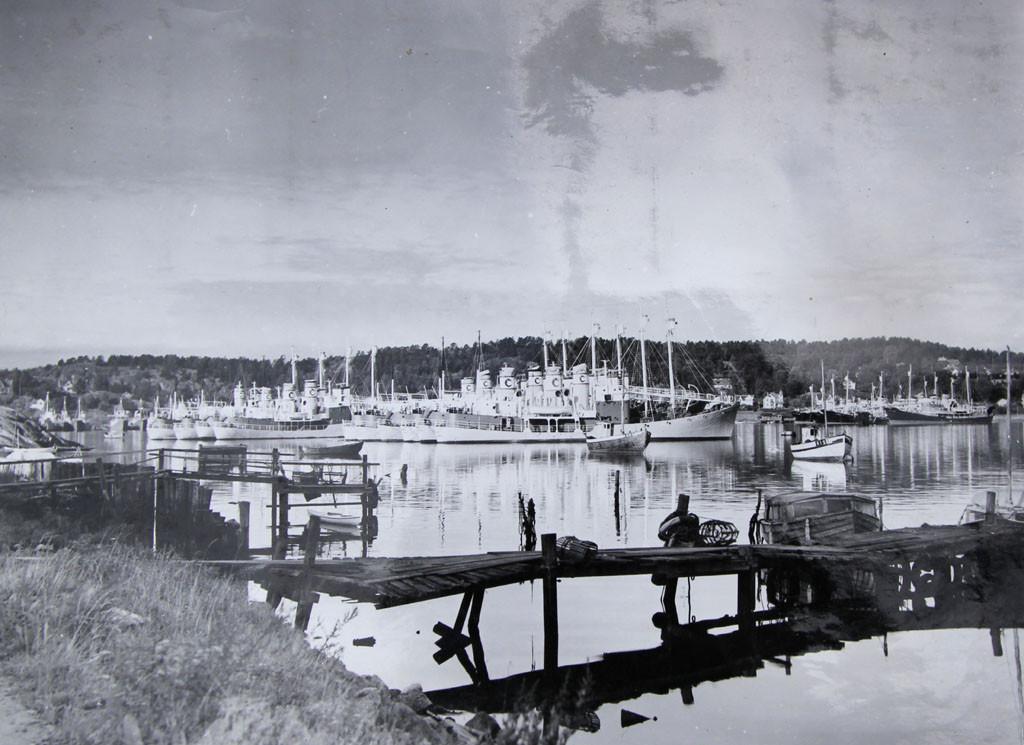 Bilde av Thor Dahl-båter i opplag ved Huvik/Fjeldvik i 1952.