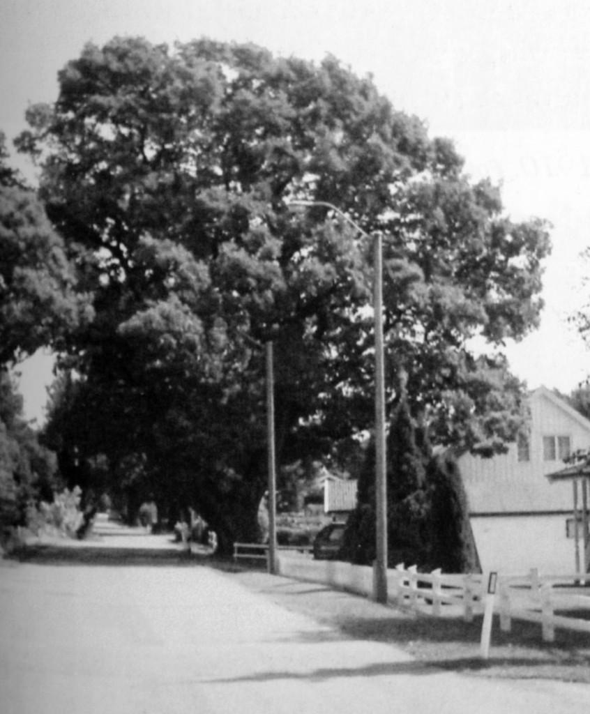 Bilde av Den gamle eika på Mosserød