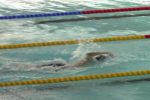 Bilde av Sandefjord Svømmeklubb