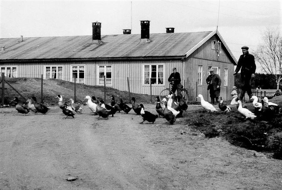 Bilde av TYSKERBRAKKENE I BUGÅRDEN