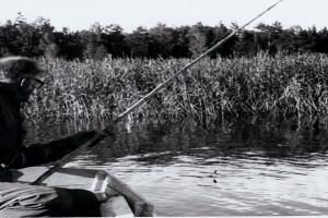 Bilde av Goksjø med omegn
