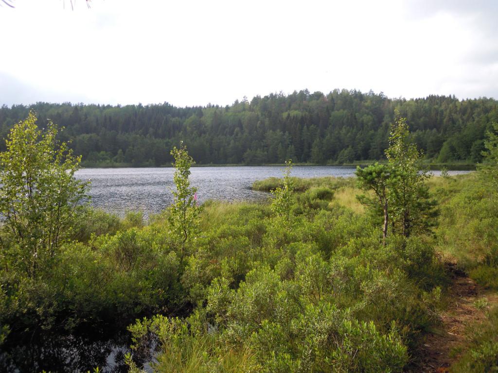 Bilde av Napperødtjernet nordsiden.