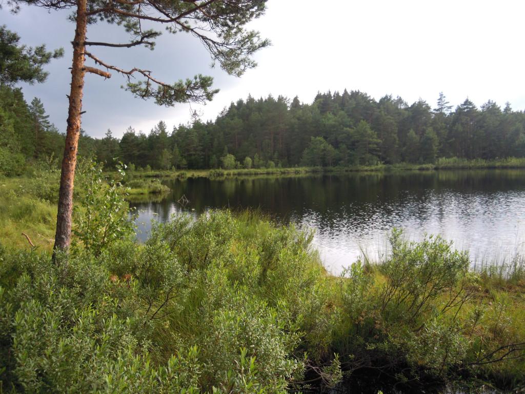 Bilde av Napperødtjernet mot syd.